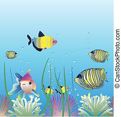 aquarium and fishes