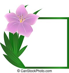 Beautiful square lily flower background