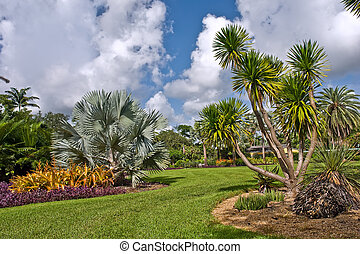 Tropical botanic garden