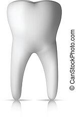 molar, dente