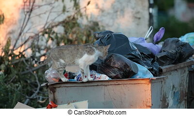 homeless hungry cat looking for food near theoverflowing...