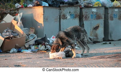 homeless dog digging in the waste