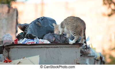 homeless cat looking for food in ga - homeless cat looking...