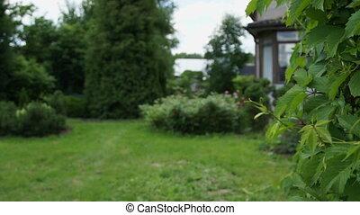 Small garden at backyard in summer day