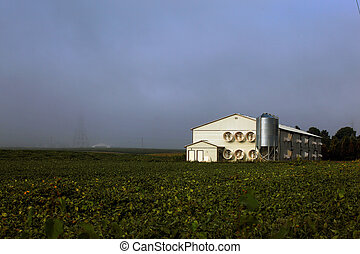 modern poultry shed - mass production modern poultry farming...