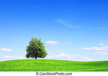 árvore, verde, paisagem, verão