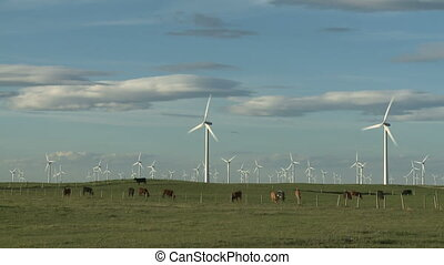 Wind Farm and Cattle - Wind turbines on a ranch