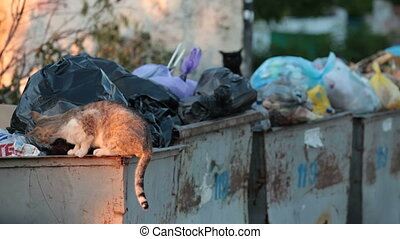 homeless hungry cat in garbage bins - homeless hungry cat...