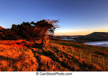Otago Peninsula, Dunedin - eco tourism travel destination