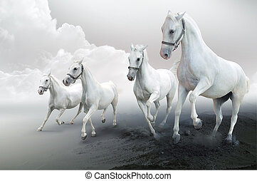 Four white horses  - Photo of four white horses in motion