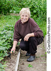The elderly woman works on a kitchen garden - The elderly...
