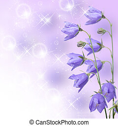 Beautiful blue flowers campanula on lilac background