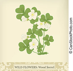 Wood Sorrel, Wild flower. Beautiful vintage colors