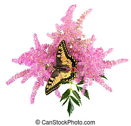 Tiger Swallowtail (Papilio Glaucus) Butterfly on A...
