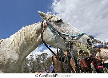 horse - mountain horse in the lush bushland