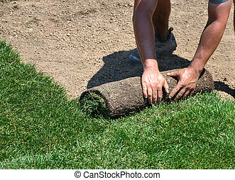 Laying sod - Man laying sod for new green lawn