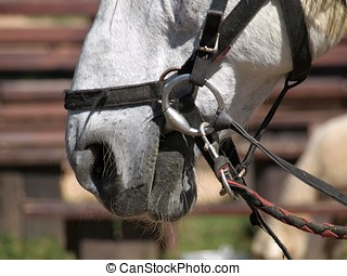 Closeup of a Horse's Mouth - Detailed view of the bridle and...