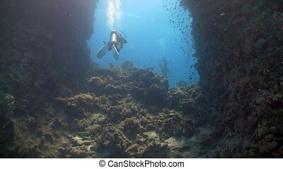 diver swims among coral reefs, Red sea