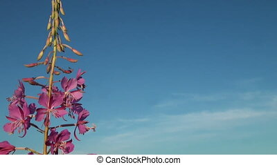 Purple flower in the sky