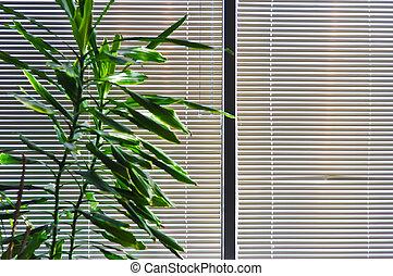 zöld, cserepes növény, ellen, ablak,...