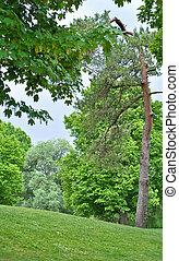 landschaftsbild, grün, wald, Bäume