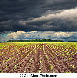 Field with sprouting crops - View of field with sprouting...
