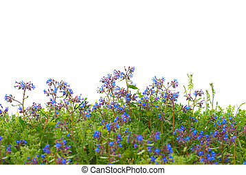 Flowers with green grass - Pattern of blue flowers and grass...