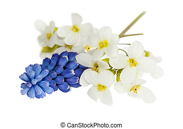 Spring flowers - Small bouquet of beautiful spring flowers...