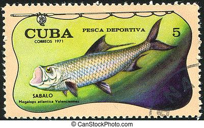 poststamp fish - CUBA - CIRCA 1971: stamp printed by Cuba,...