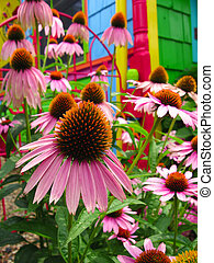 Flowers - Magic Fantasy Rainbow Coneflower Garden - Close-up...
