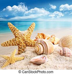Estrellas de mar, Conchas marinas, playa