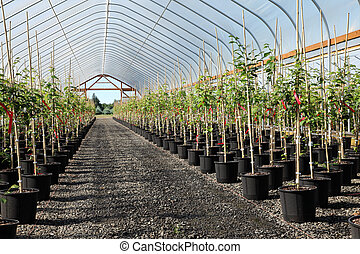 Greenhouse plants nursery, Oregon - Seedling plants in pots...