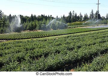 Tree farm, Oregon.