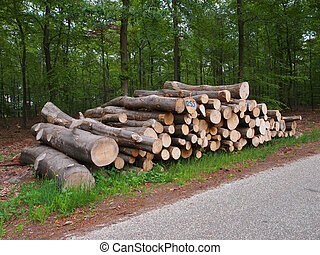 logs on roadside - newly felled timber on the side of the...
