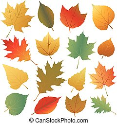 autumn leaf - autumn leaves collection
