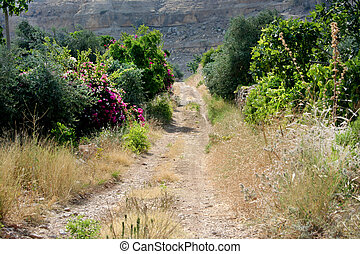 old sandy raod - An unpaved road in a rural area