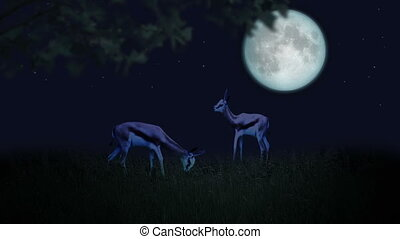 Couple of deer in the moonlight