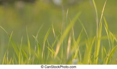 Close-up on fresh spring grass with