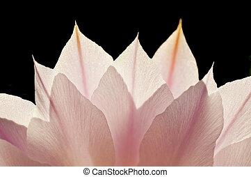 blossom in back-light