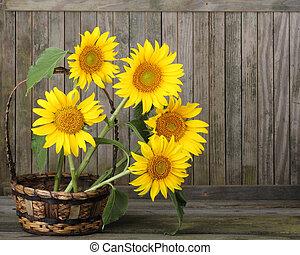 Sunflowers, Helianthus annuus - Sunflower, Helianthus...