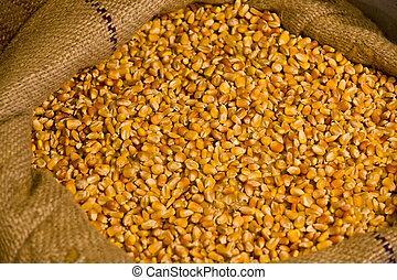 Corn - Some corn seed in a bag