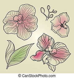 Set of floral orchid design elements (from my big...