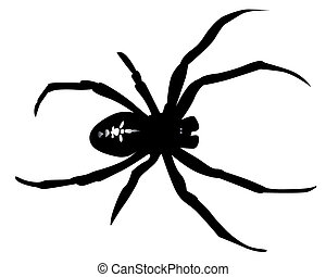 black silhouette of a spider on a white background