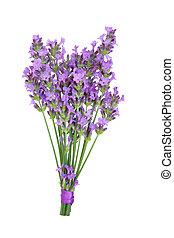 Lavender Herb Flower Posy - Lavender herb flower posy...