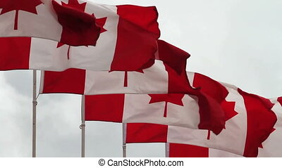 Canadian Flags - Row of Canadian flags blowing briskly in...