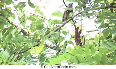 bird on a tree.