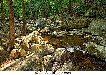 Wood river in Shenandoah National park