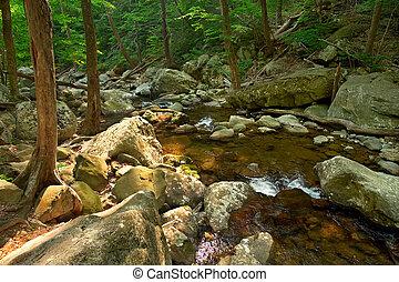 Wood river in Shenandoah National park