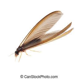 termita, blanco, hormiga