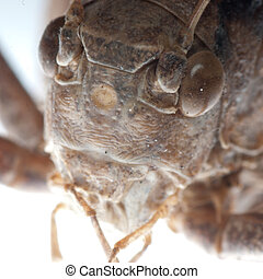 katydid portrait - insect katydid portrait macro